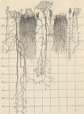 Root Bound